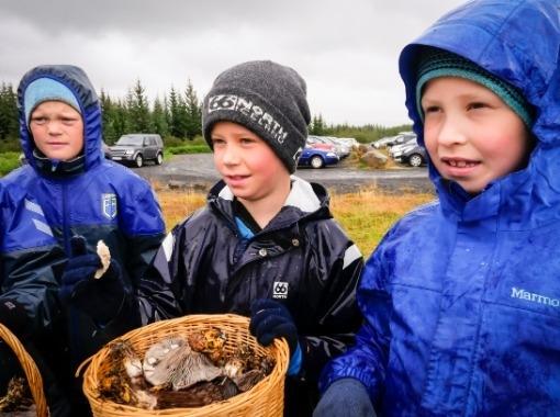 Gathering mushrooms in Heiðmörk