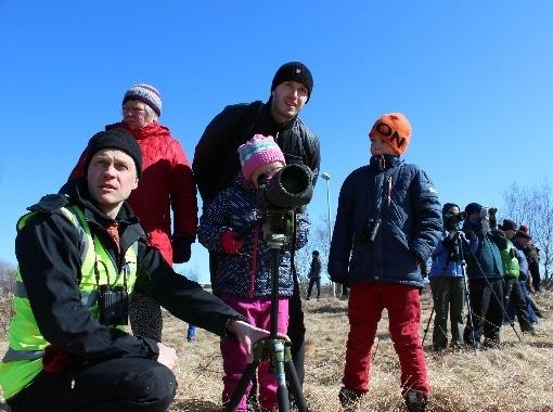 Birdwatching in Grafarvogur - Hiking trips with Science tips